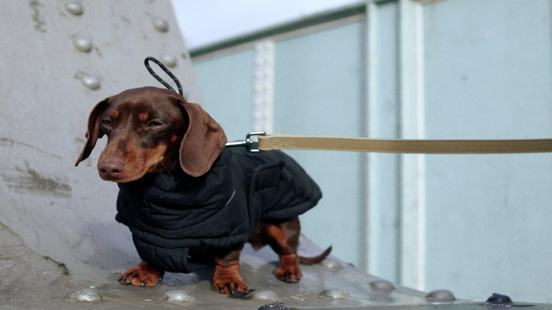 Esta es Zara Pet, la nueva línea de accesorios para mascotas